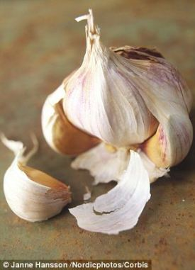 Closeup view of garlic bulb and clove --- Image by © Janne Hansson /Nordicphotos/Corbis