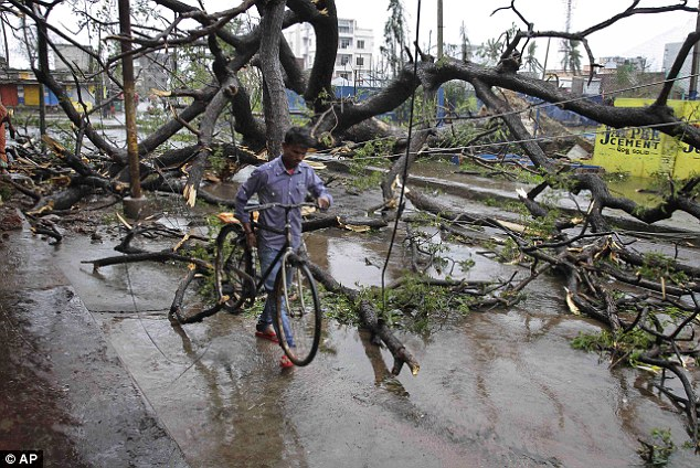 Blocked road: A man makes his way with his bicycle through uprooted trees fallen during Cyclone Phailin on a road in Berhampur, India