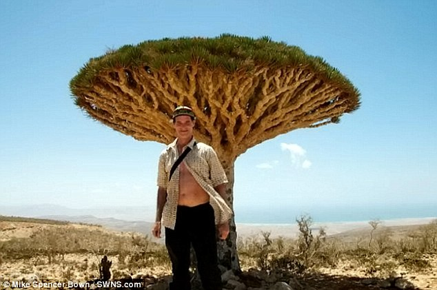 New encounters: Mike Spencer Bown pictured in front of a Dragon Blood Tree in Socotra, Yemen