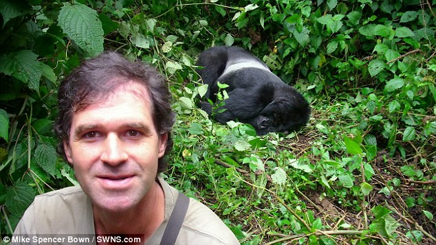 Wildlife: Mike Spencer Bown pictured with gorillas in Rwanda in 2010