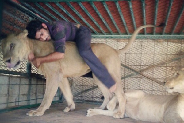 Affection: The trust on display between owner and pet is truly staggering as the lion allows itself to be hugged and gives a ride