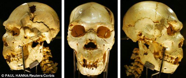 Una combinación de tres fotos separadas que muestran el cráneo de un Homo heidelbergensis, d