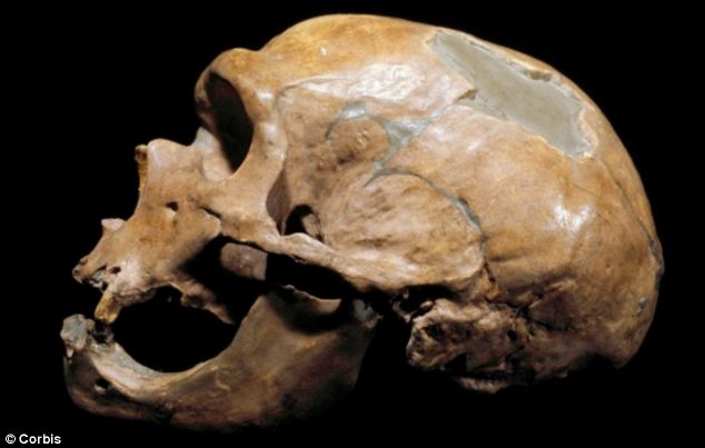 Neanderthal groups (skull, pictured) are believed to have been small and relatively isolated, which meant a natural emotional focus on close internal relationships