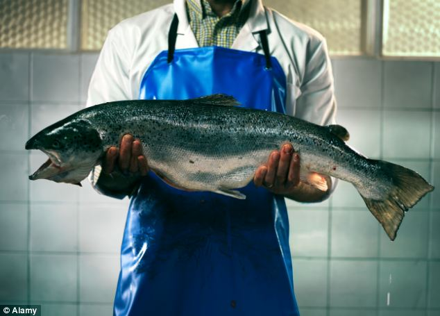 'Frankenfish' are genetically modified salmon created by company AquaBounty which grow at twice the rate of wild Atlantic Salmon, and are constantly hungry