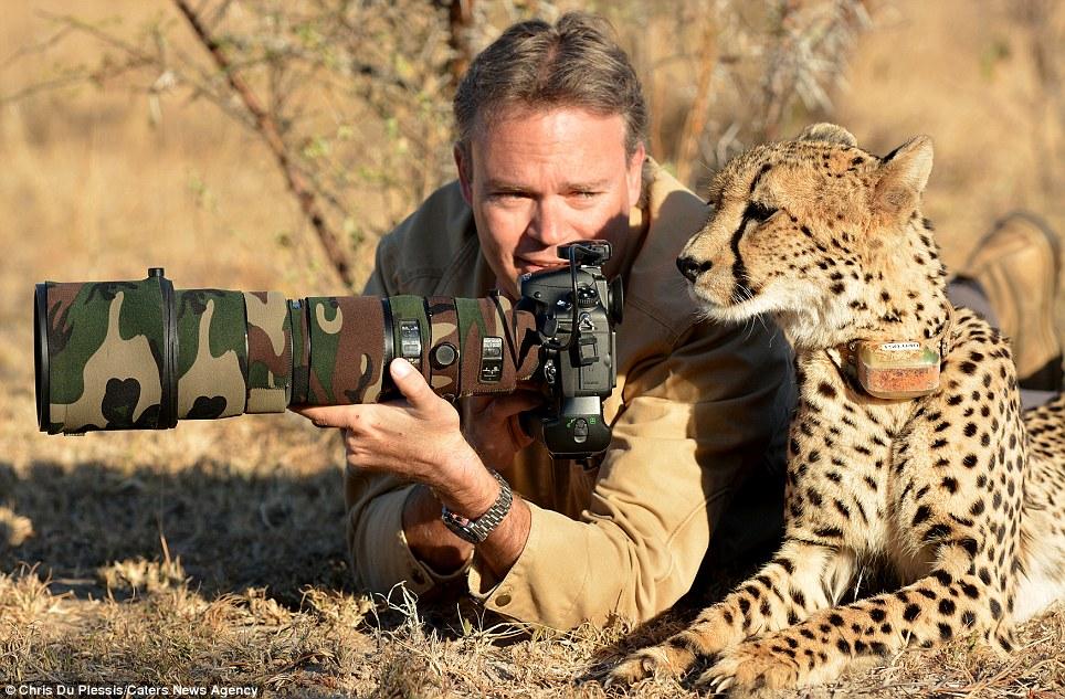 El fotógrafo Chris Du Plessis y Mtombi el Cheetah repasar las fotos