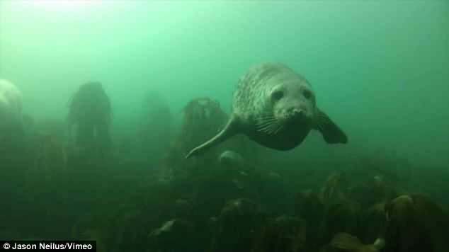 Underwater: The clip captures the curious creatures as they play in their natural habitat