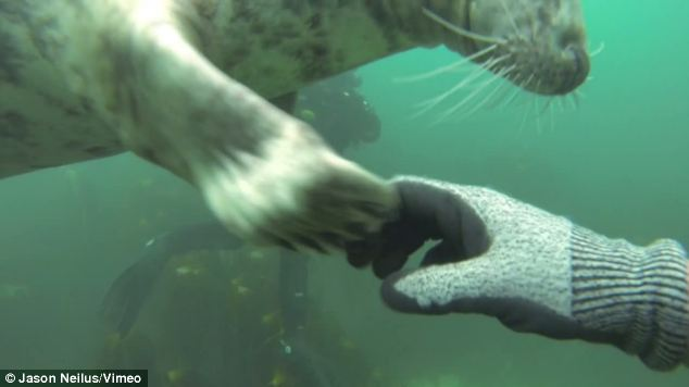 Encounter: A pup shakes hands, or rather paws, with one of its new human friends