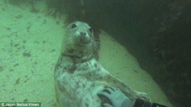 Friendly: This seal appears more like a household dog or cat as it rolls over to be tickled