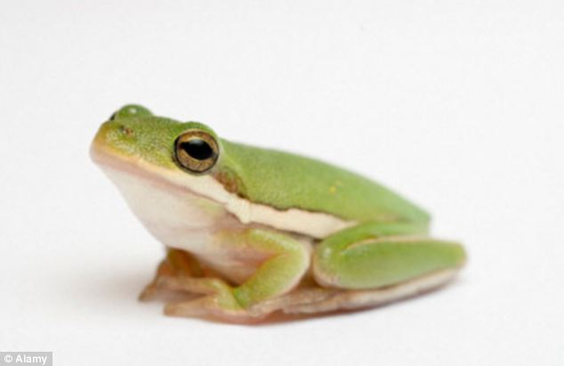 A husband accused of drugging and sexually abusing his wife with a tree frog has been charged with rape and cruelty