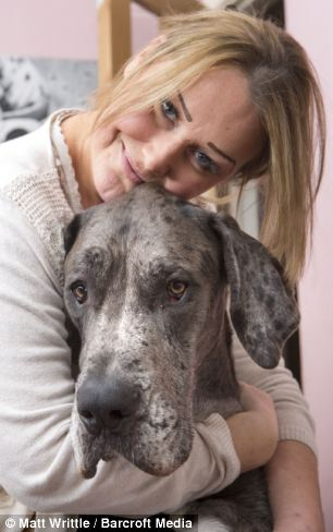 Britain's biggest dog, Freddy cuddles up with owner Claire Stoneman