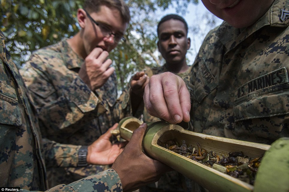 I'm a Marine, get me out of here! The soldiers pick out bugs to eat from a bamboo stem
