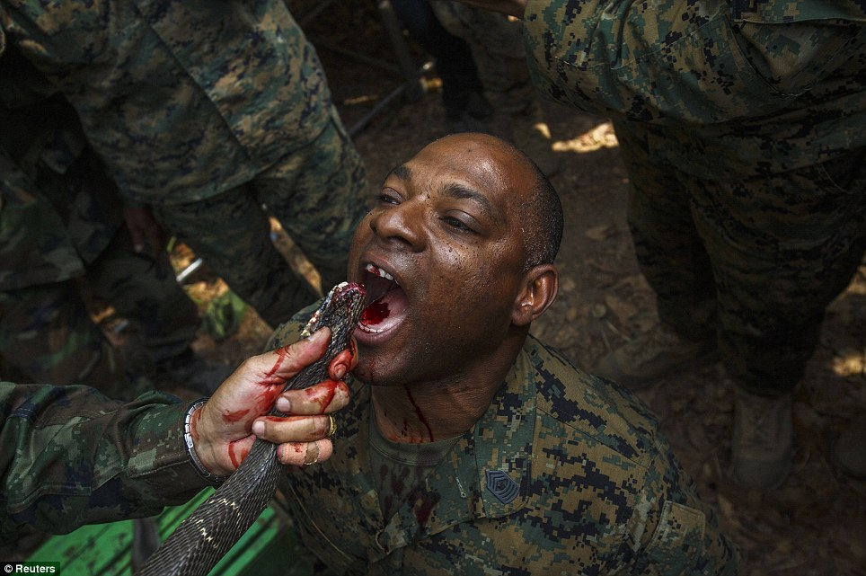 Snake it or leave it: A U.S. Marine drinks the blood of a cobra during a jungle survival exercise with the Thai Navy in Chanthaburi province, Thailand