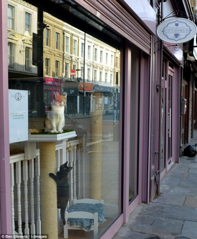 Two moggies await customers at Lady Dinah's Cat Emporium, which opened its doors this morning