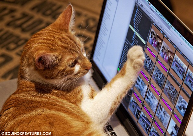 The cafe's website crashed as cat-lovers scramble to book a table