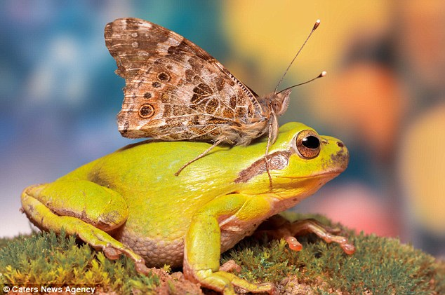 Meanwhile, with no other friends around, this frog in San Roque, Spain, was caught making friends with a moth