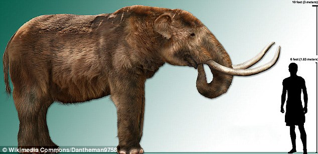 More recently, other archaeologists, including a research team from Columbia, have challenged the 'overkill' theory. They argue that of the 36 animals that went extinct, only two - the mammoth and the mastodon, illustration pictured - show clear signs of being hunted