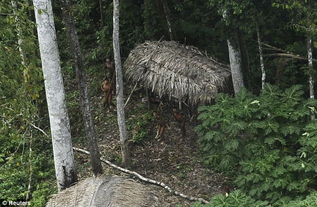 Remote: The tribe is pictured surrounded by banana plants near their straw roof huts