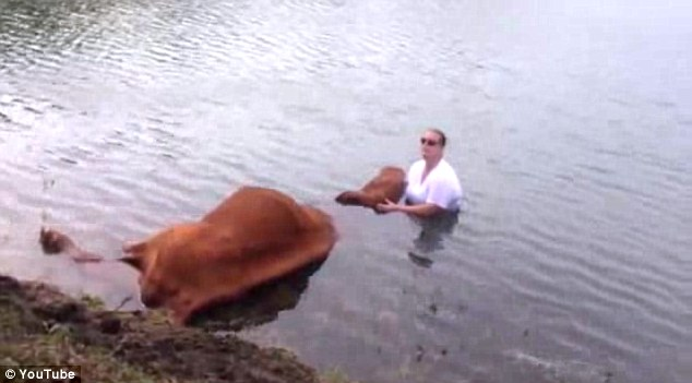 Lifesaver: Deputy Christine Ammons held the bull's head above water for about 45 minutes until help arrived