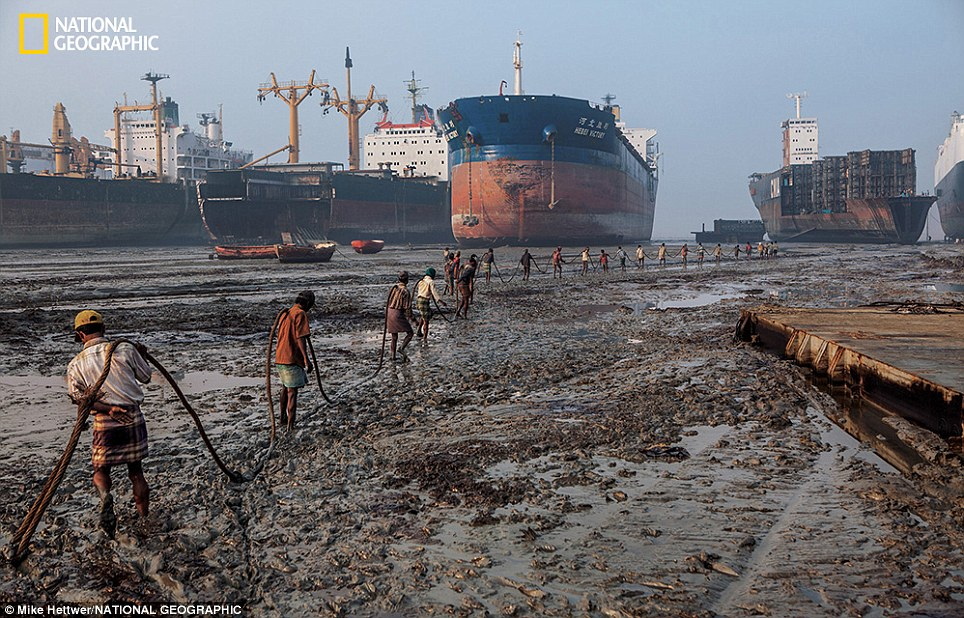 Arduous: At low tide ship-breakers haul a 10,000-pound cable to a beached ship to winch pieces ashore as they dismantle it