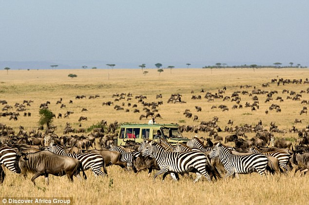 Image result for serengeti great migration safari