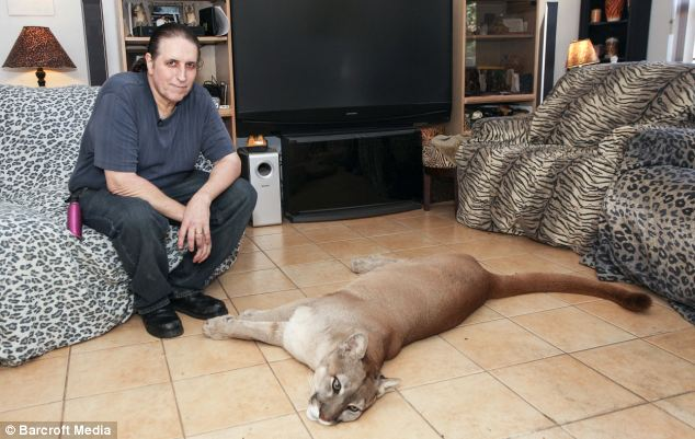 The lion enjoys watching TV with Mr Infanti and pines for him when he is away, his wife says