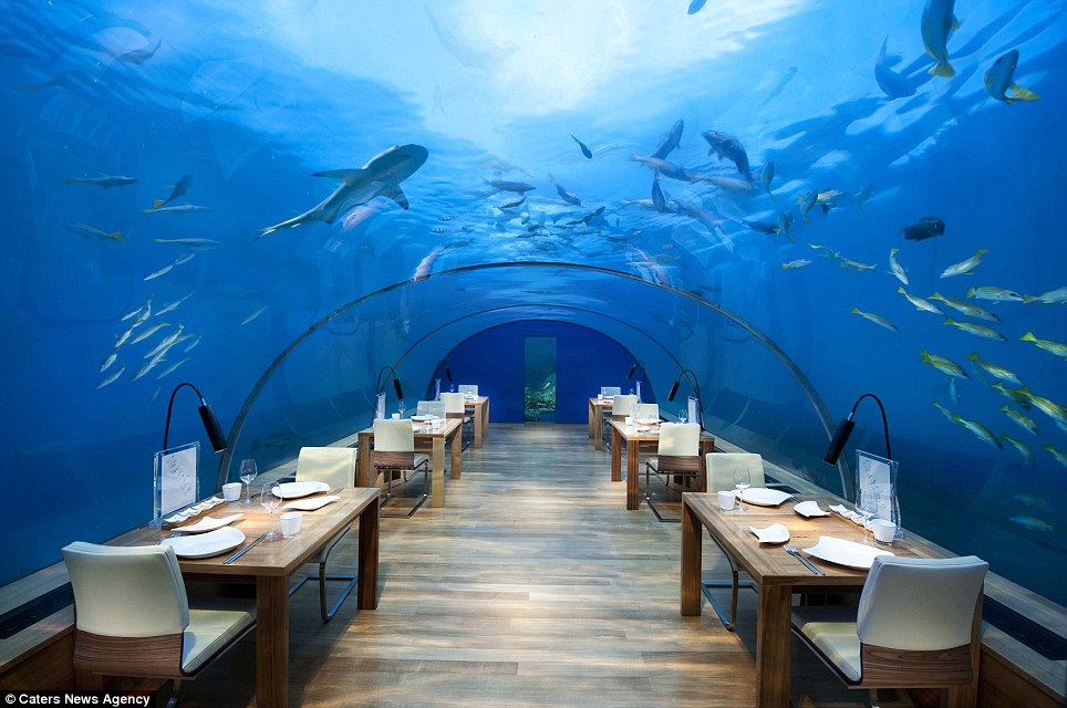 Restaurant with a view: Guests inside underwater restaurant Ithaa can dine on five-star cuisine while surrounded by sharks, sting rays and turtles