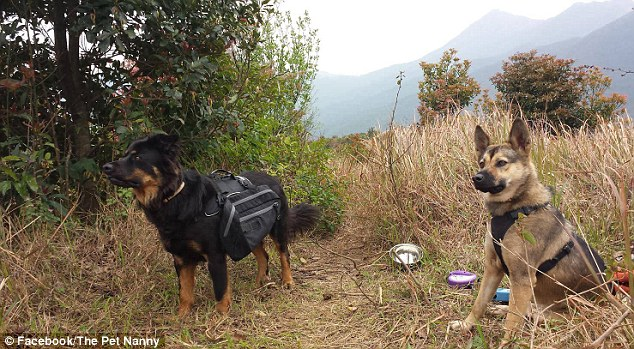 Well-exercised: Dexter (left) out on a walk with another dog before the python attack