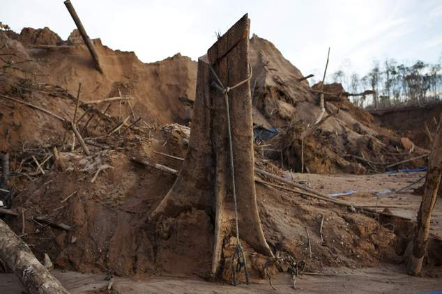 In this May 3, 2014 photo, a rope hangs around the trunk of a tree at a illegal gold mining process in La Pampa in Peru's Madre de Dios region. An estimated ...