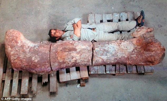 Tulang-tulang paha 'disambungkan ke ...: Seorang juruteknik bersebelahan dengan tulang paha dinosaur - mungkin yang terbesar pernah berkeliaran bumi/Photo by dailymail.co.uk