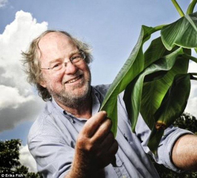 'There is very good evidence that vitamin A deficiency leads to an impaired immune system and can even have an impact on brain development,' said Professor Dale, pictured. 'Good science can make a massive difference here by enriching staple crops such as Ugandan bananas with pro-vitamin A'