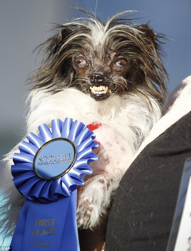 Peanut Is Crowned Worlds Ugliest Dog Daily Mail Online