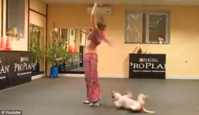 Dog and woman dancing   ozara gossip
