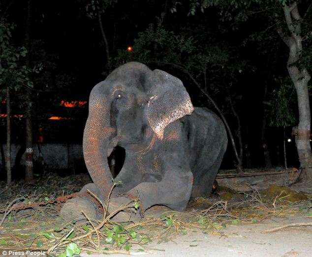 Every day, the majestic animal was forced to hold out his trunk and beg for coins from passers-by - surviving only on plastic and paper for food