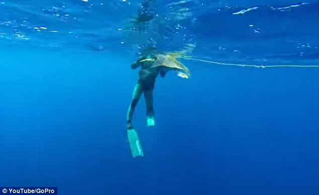Colin Sutton films on a GoPro camera as Dietrich dives in to help the turtle