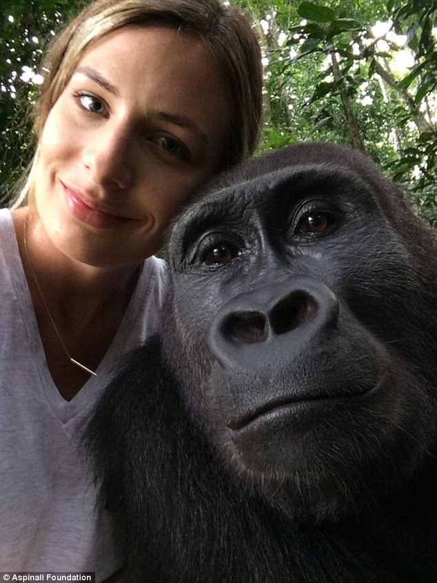 Success story: Tansy Aspinall with a freed gorilla in Gabon this year. She told her father after the six-day trip that it had been the 'best trip of her life'