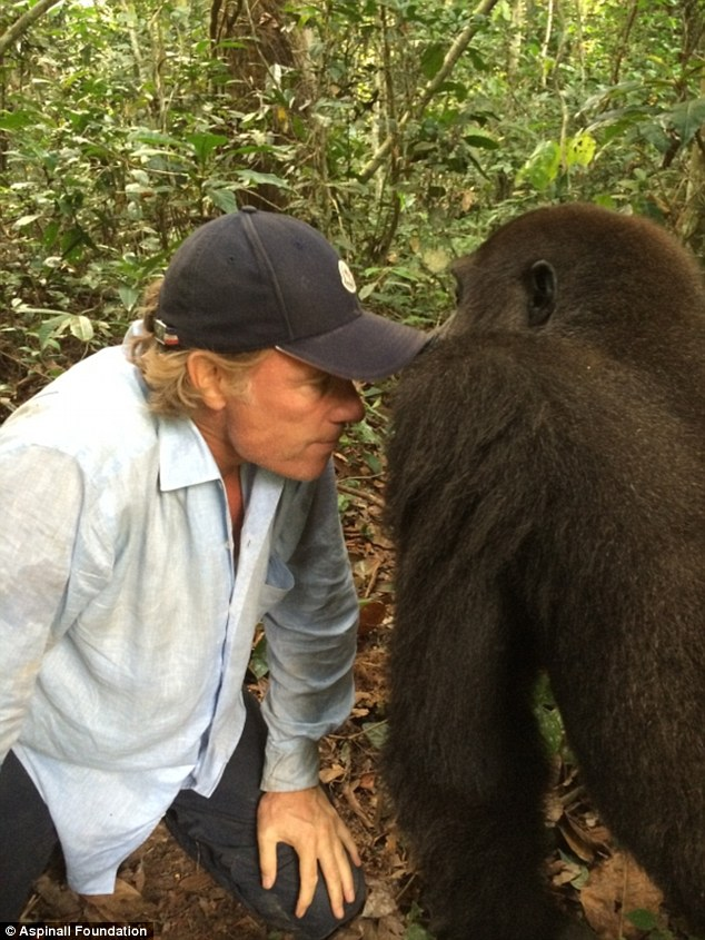 Maverick: Damian Aspinall (left) with one of his Gabon gorillas. His father Johnny founded Aspinall Foundation