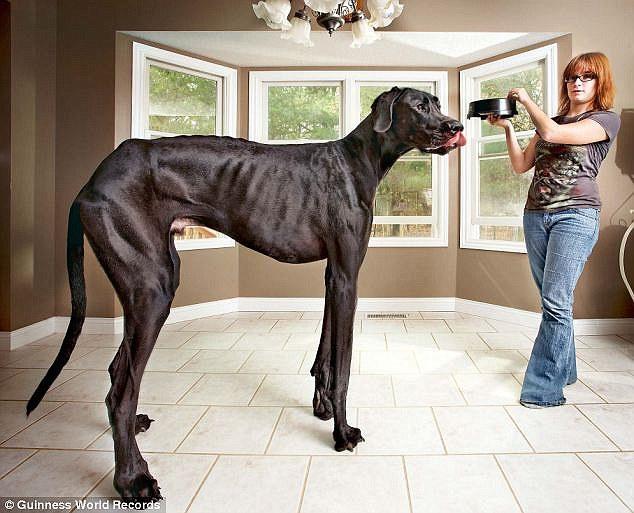 Image result for zeus dog