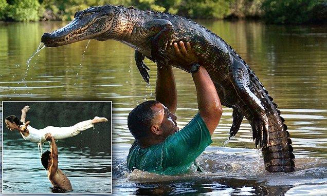 Alligator Whisperer Lance Lacrosse Lifts Reptile In