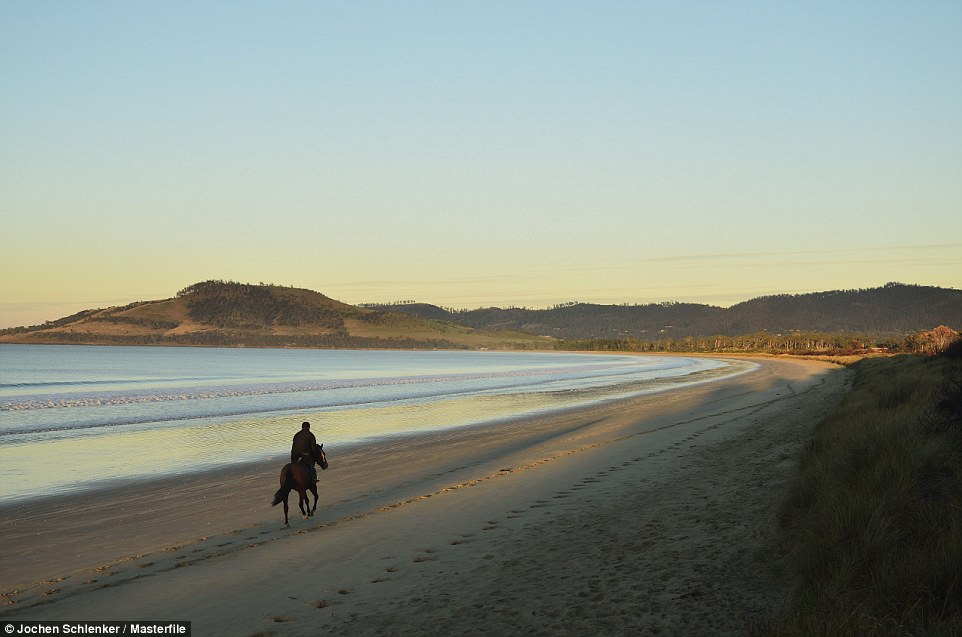 A man rides a horse along the peaceful beach at Frederick Henry Bay, Tasmania