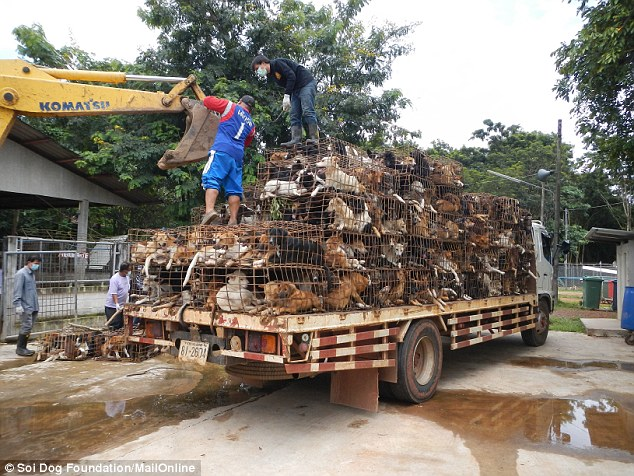 An intercepted cargo of dogs destined for the dog meat trade is unloaded at a rescue centre in northern Thailand