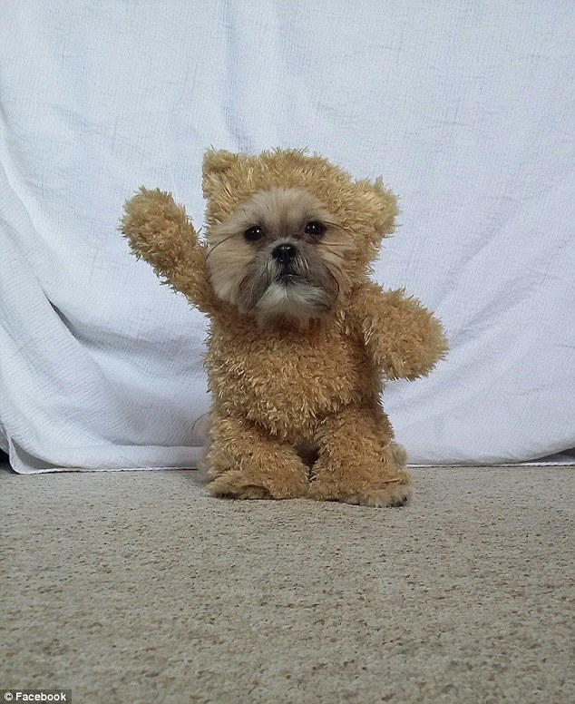 Cunning disguise: Roth crafted the fluffy ensemble for her tiny 14-inch-tall puppy out of a plush toy