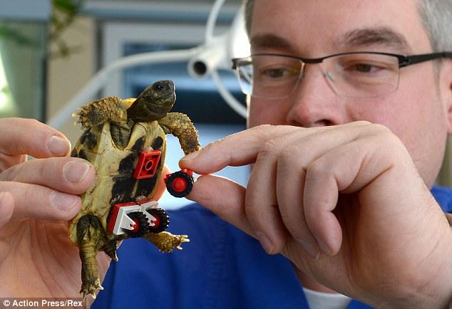 Avançando: Dr Carsten Plischke emprestado de seus filhos coleção Lego para fazer a cadeira de rodas