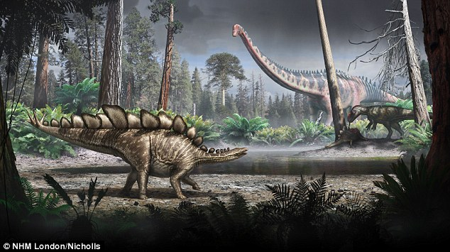 Small but mighty: At 18 feet (5.6 metres) long and 9.5 feet (2.9 metres) tall, Sophie is relatively small compared with the largest of the species, which measured up to (29 feet) nine metres. An illustration of a Stegosaurus (foreground) is pictured. She weighed around the same as a rhino