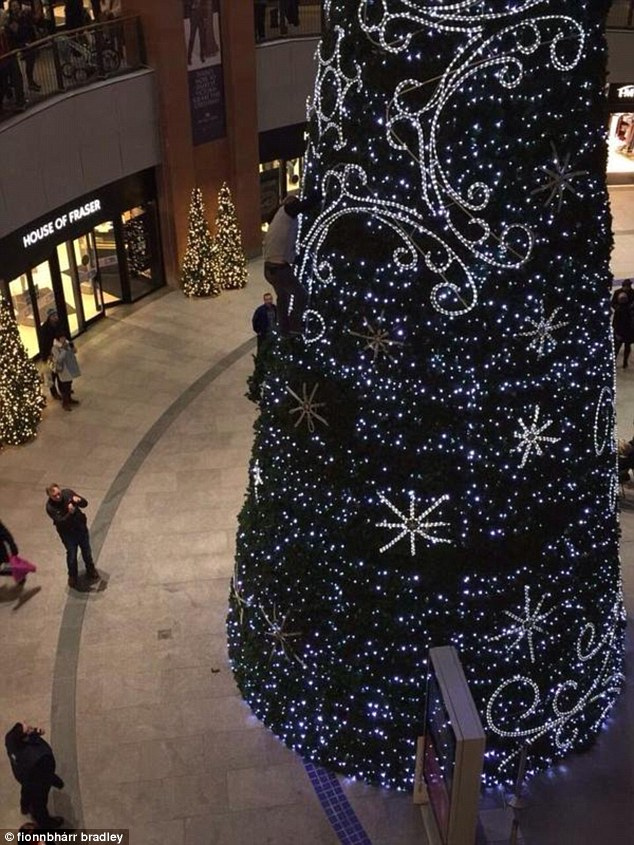 A man climbed up the giant Christmas tree in Victoria Square, Belfast, at around 10pm last night