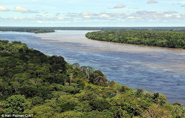 Scientists believed that rainforests were poor at absorbing carbon dioxide despite their rich plant life, but the new study shows that they, in fact, account for more than half of all greenhouse gases absorbed by vegetation
