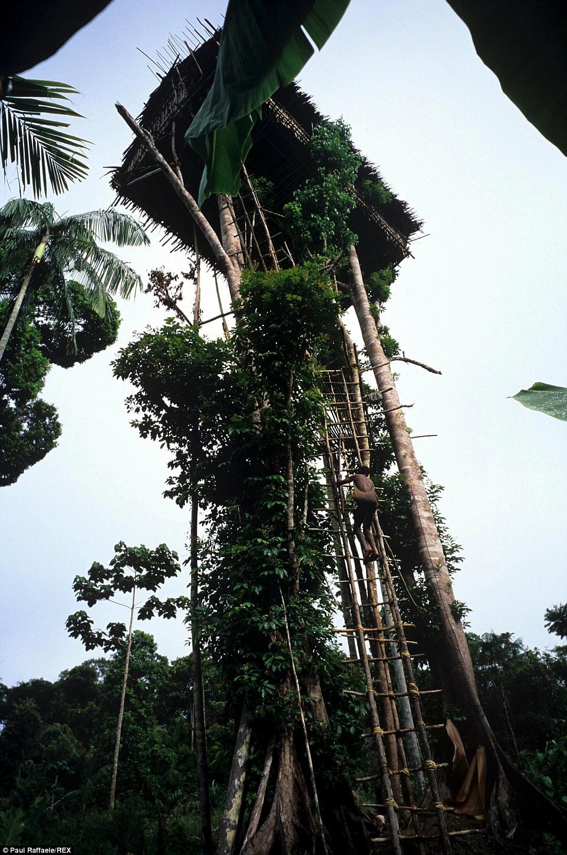 Meet The Korowai Tribe Of New Guinea Daily Mail Online