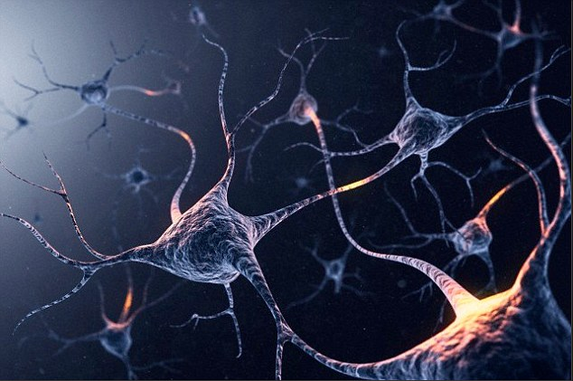 Dr Kaku's theories on the future of the mind are wide-ranging, from the possibilities of telepathy to controlling 'programmable matter' with our thoughts alone (artist's impression of neuron, pictured)
