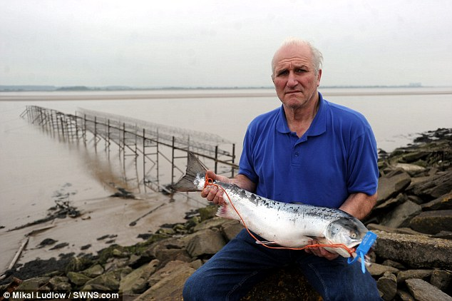 Nigel Mott is the last remaining commercial salmon fisherman on the River Severn and claims it is impossible for him to make a living if he is restricted to catching just 30 fish in a season