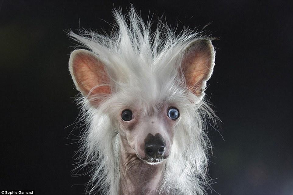 Photographer Sophie Gamand Captures Portraits Of Bald Dog