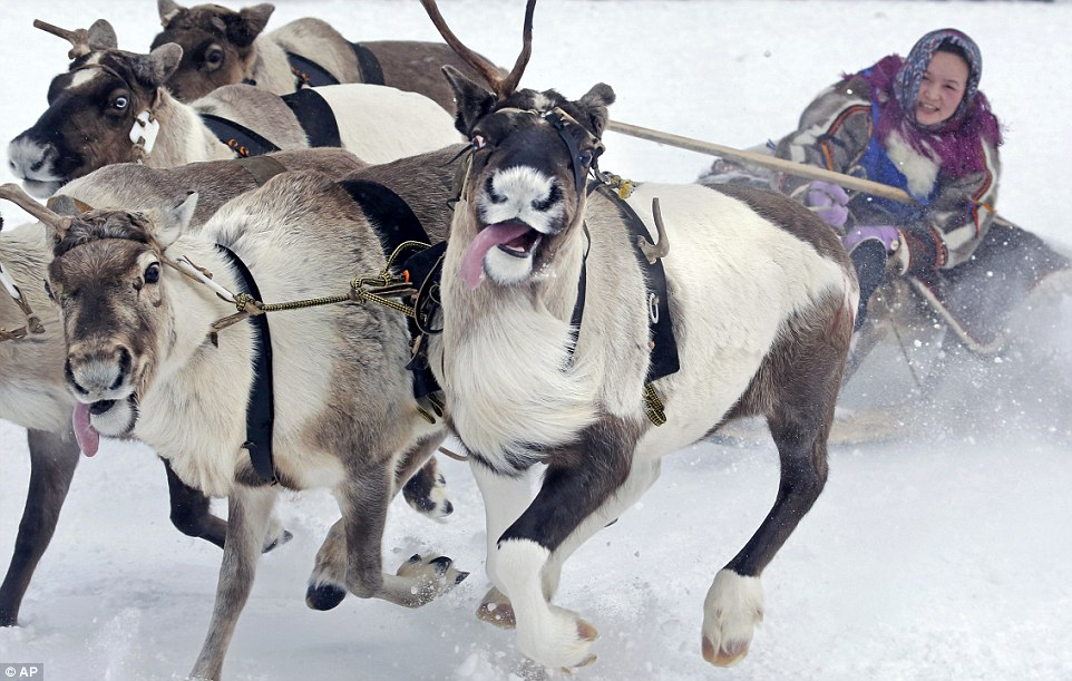 Image result for reindeer racing